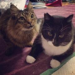 Betty and Kovu were part of a TNR project along with 13 other cats. Betty was quite feral, and was released to her cat colony. Kovu found his forever home with a father and son.