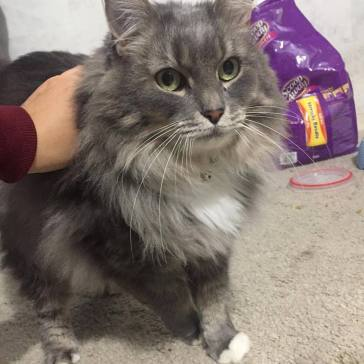 Elliot (formerly named Mr. Emi) was rehomed to a family in Sacramento with one other cat.