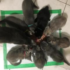 Hungry kittens!