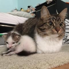 Rosie with her favorite kitten, Jake.