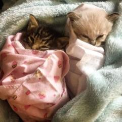 Doesn't everyone love a #purrito?