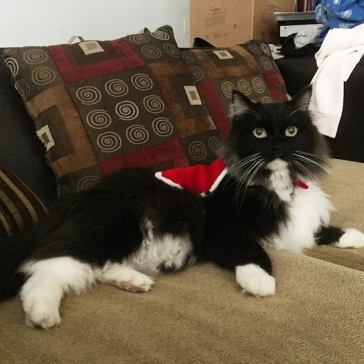 Sylvester (formerly named Squishy) was picked up from a vet clinic. He was rehomed to a lovely couple in Oakland with their own home.